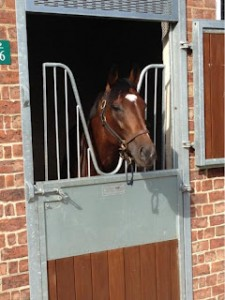 Frankel at home
