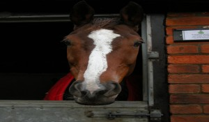 Kauto Star goes off to learn dressage