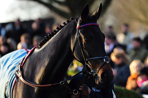 Sprinter Sacre hot favourite for the Cheltenham festival