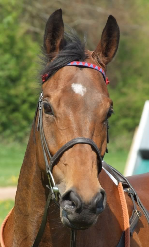 Bobs Worth Gold Cup favourite