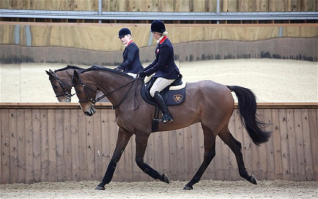 Kauto Star at work in dressage arena