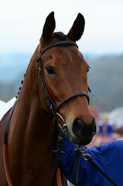 Le Beau Bai was put down at the stables of Richard Lee