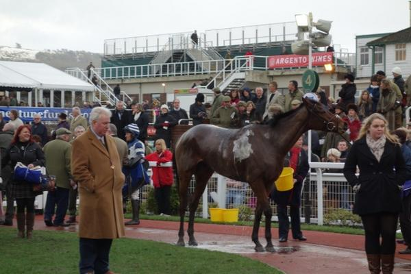 The New One will race at the Cheltenham Festival VG TIPS