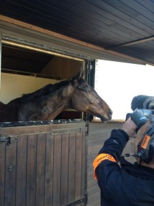 channel 4 film the grand national vgtips