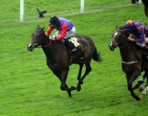 estimate wins the ascot gold cup for the Queen