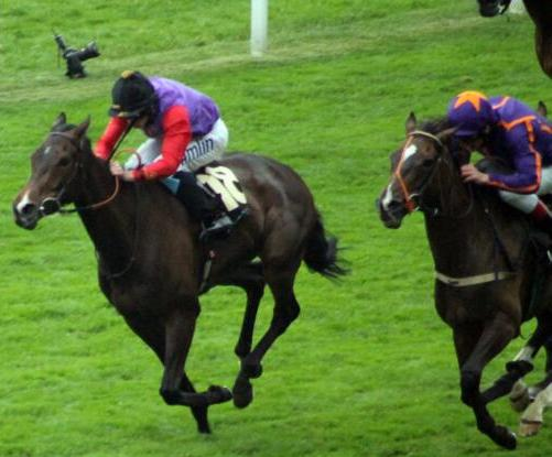 estimate wins the ascot gold cup