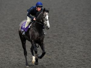 """Johnny Murtagh: """"I do my own thing and I'm riding well."""""""