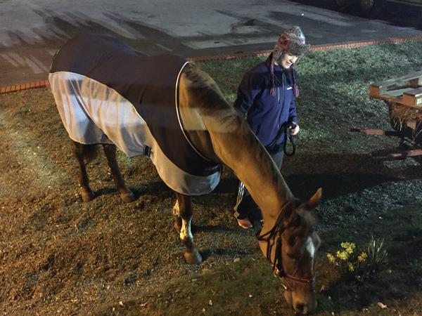 Annie Power back on her feet. Photo: Racing UK
