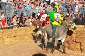 donkey-racing-all-weather