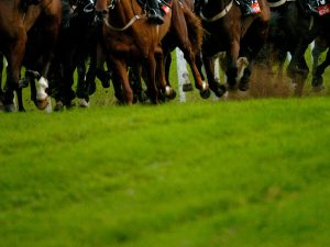 Cheltenham Racing Friday November 15 OFF