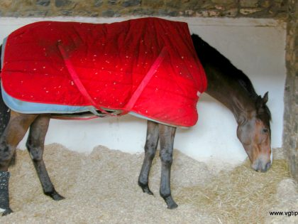 Kauto Star. Gone for a year. Never forgotten.