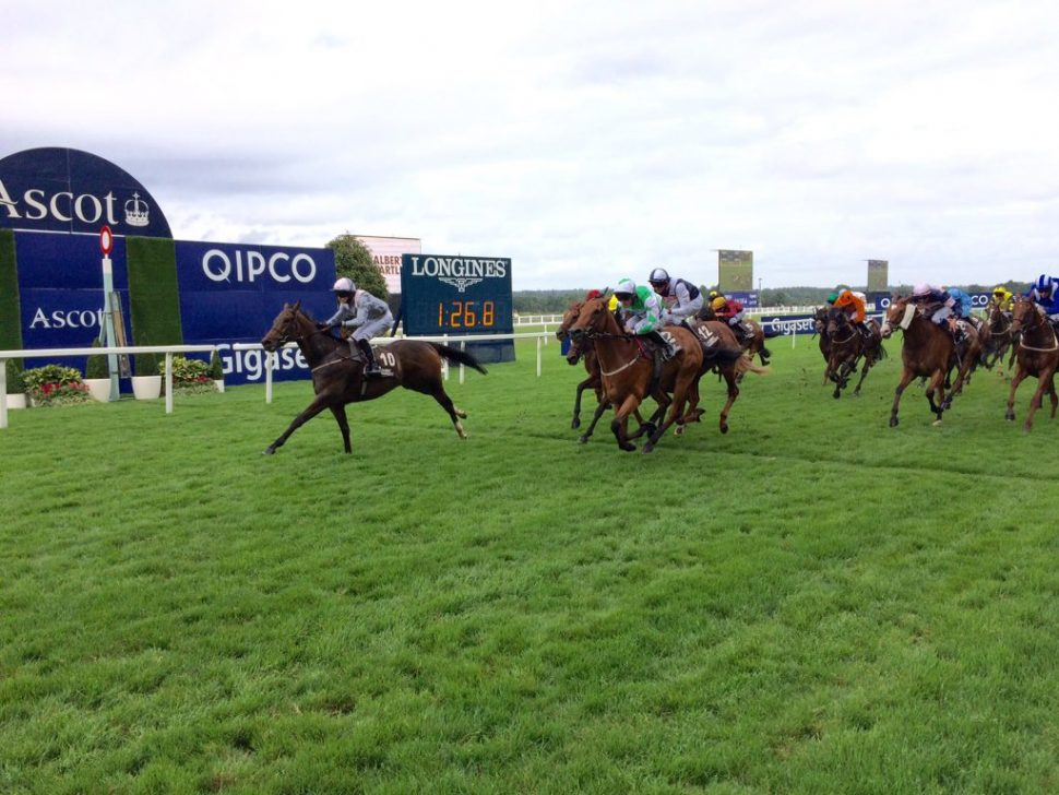 Dutch Law a big priced winner for members of VG Tips
