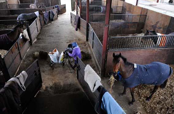 colin Tizzard trains horses in Dorset