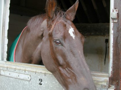 The Mighty Denman. A truly great racehorse