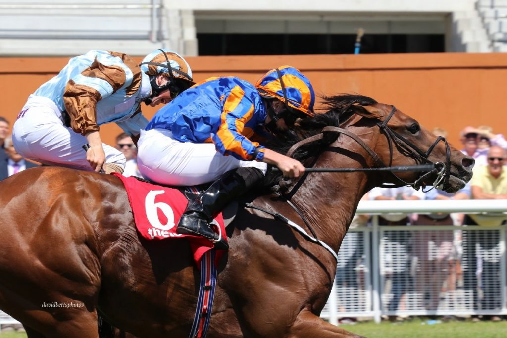 ryan moore rides battle of jericho to victory at the curragh