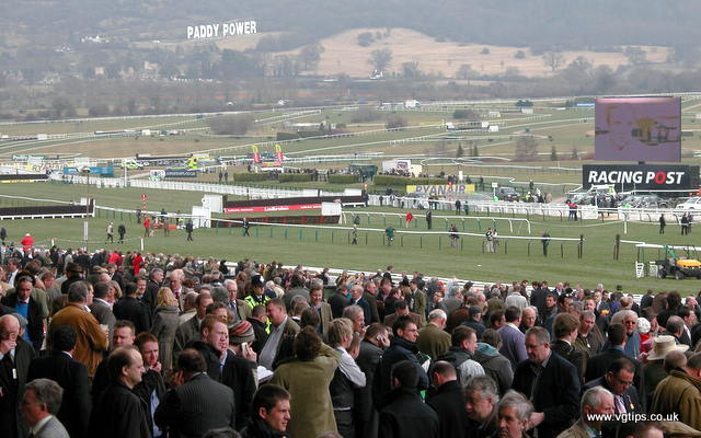 vg tips photo of cheltenham