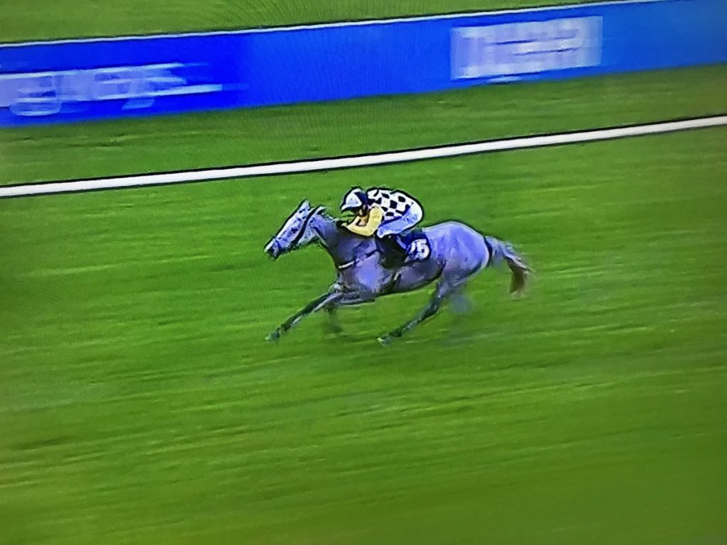 Great White Shark wins the Cesarewitch