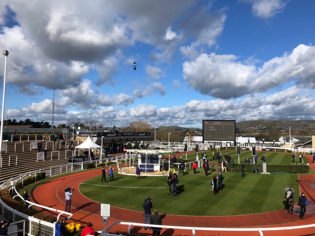 shishkin enters winners enclosure at cheltenham